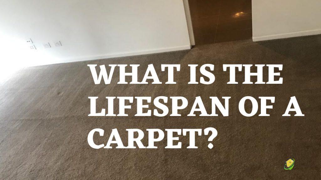 carpet clean
